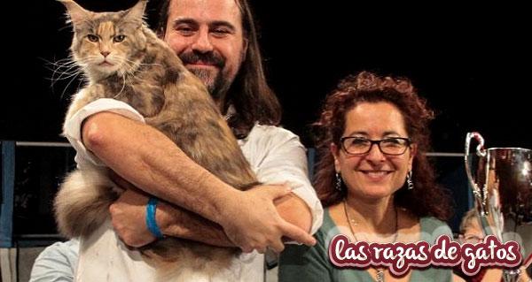 imagen del gato calliope con sus dueños