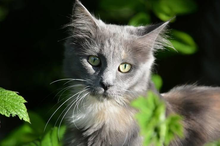 pasta de malta en gatos